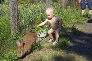 кролик-и-Андрюша