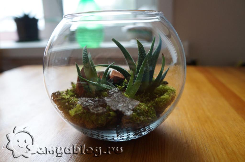 флорариум - сад в банке