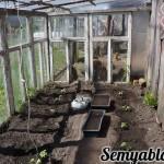 Открываю новую рубрику| Простой семейный огород| Новости