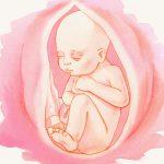 33 неделя беременности развитие плода – 33 неделя беременности: что надо знать, что происходит с малышом и мамой на 33 неделе беременности
