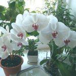 Как заставить зацвести орхидею в домашних условиях – видео о том, что и как сделать, чтобы стимулировать процесс, а также уход за растением, которому 2 года и более